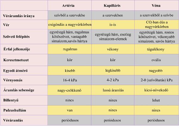 magas vérnyomás és a köteg elágazása hipertónia következménye