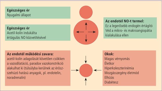 A magas koleszterinszint kockázatai