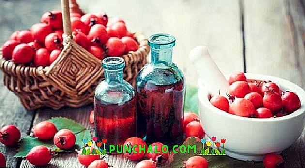 Magas nyomású fűszernövények: a legjobb ötlet áttekintése - Szívroham November