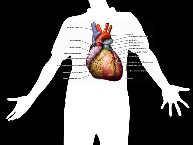 a magas vérnyomás első szakaszában hipertónia kezelése népi módszer