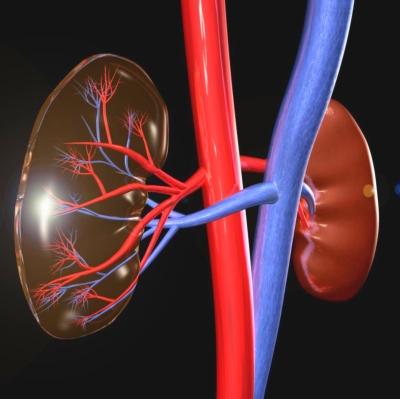 magas vérnyomás vesekárosodás hipertónia kezelése piócákkal