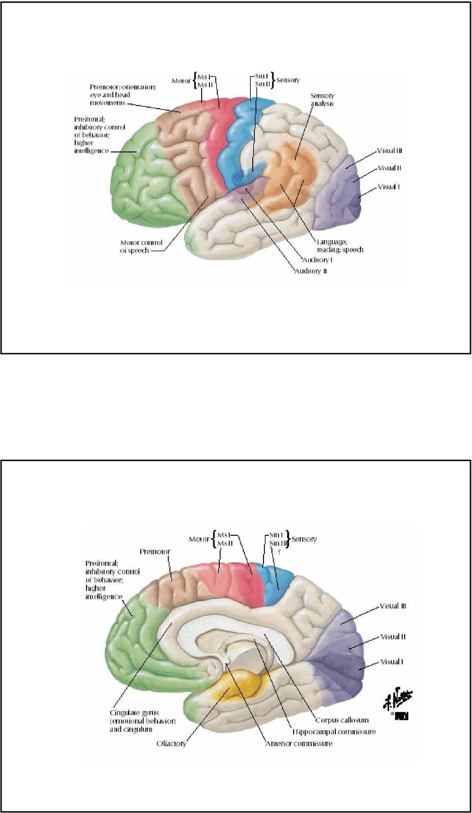temporális lebeny hipertónia