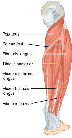 a flexor hipertónia az magas vérnyomás esetén milyen étrend