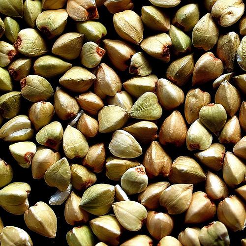 Hajdina vagy pohánka - egy ősi gyógynövény